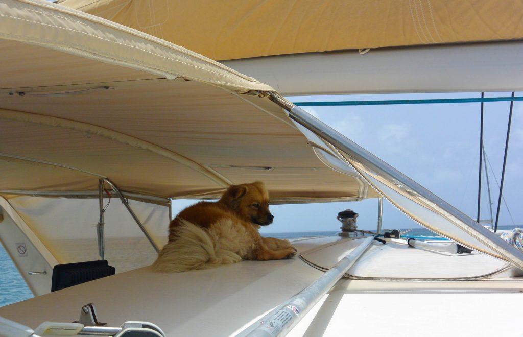 st maarten catamaran tours boat dog