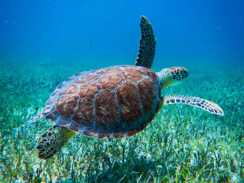 st maarten turtle snorkeling shore excursions