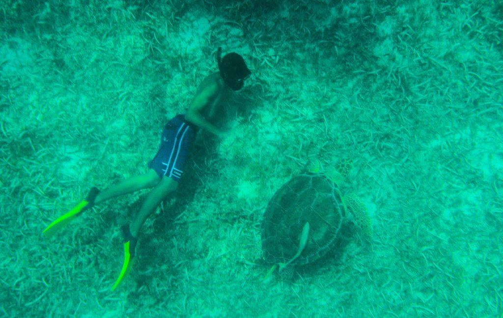 Turtle swim and snorkel st maarten Tintemarre Island