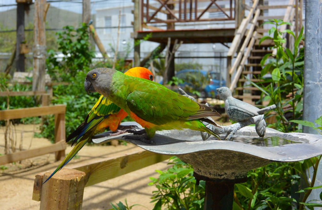 st maartin Parrot sanctuary
