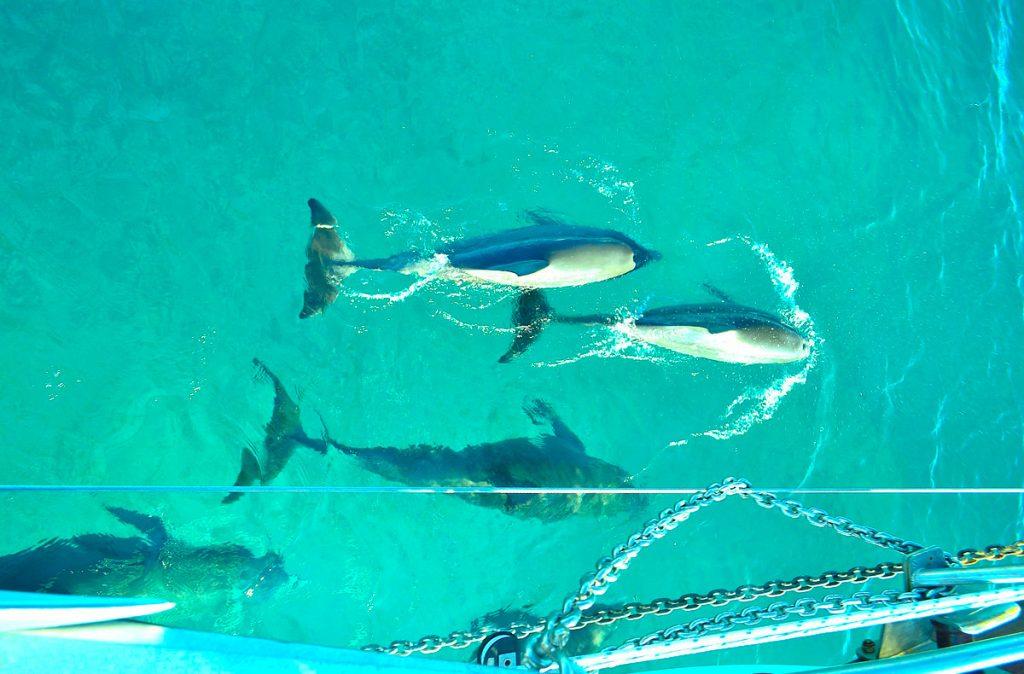 St Martin Catamaran Dolphins